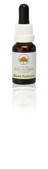 Bush Fuchsia 15 ml