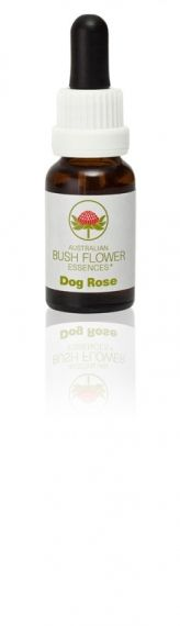 Dog Rose 15 ml