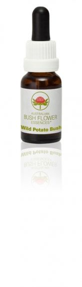 Wild Potato Bush 15 ml