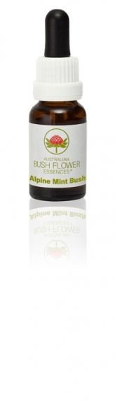 Alpine Mint Bush 15 ml